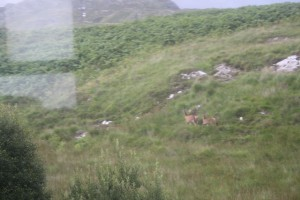Deer on the mountain