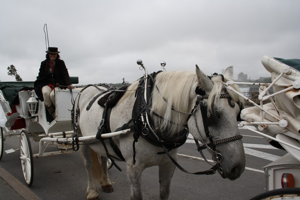 Our horse and carriage