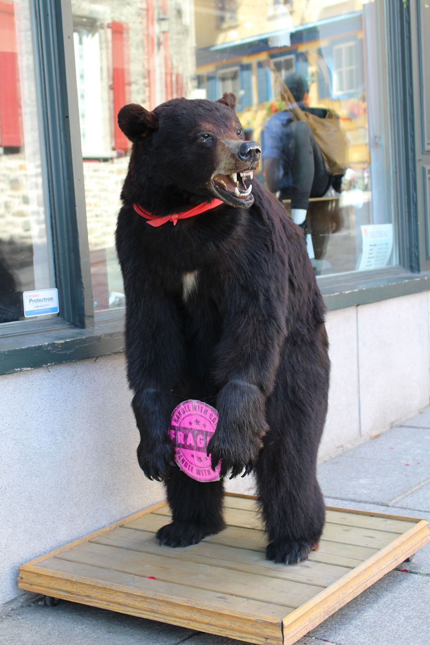 bear-in-front-of-bilodeau-boutique